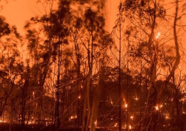 Կալիֆոռնիայում անտառային հրդեհներից զոհերի թիվը հասել է 23