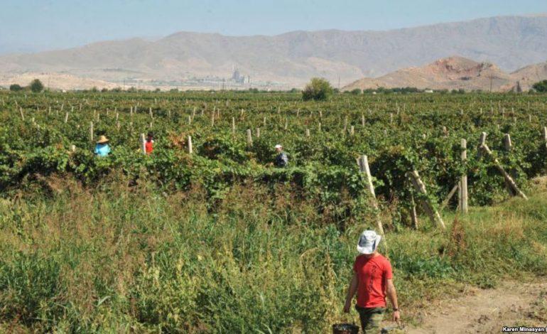 Власти Армении одобрили льготы для фермеров, перешедших на капельное орошение