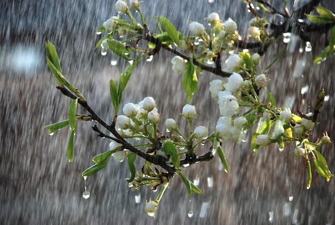 Սպասվում է անձրև և ամպրոպ՝ տեղ-տեղ ինտենսիվ