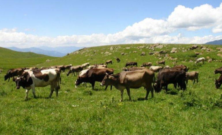 Կրակահերթ, ադրբեջանցիները շարունակում են մնալ իրենց տեղերում, 81 անասուն դեռևս չի հաջողվել վերադարձնել. գյուղապետ