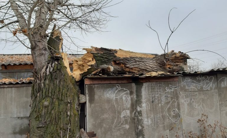 Արտակարգ դեպք. 14-ամյա տղան ծառից վայր է ընկել ու մահացել