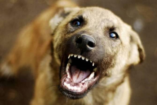 Լուսառատ գյուղում շունը 3 հոգու է կծել. օգնության են հասել փրկարարները