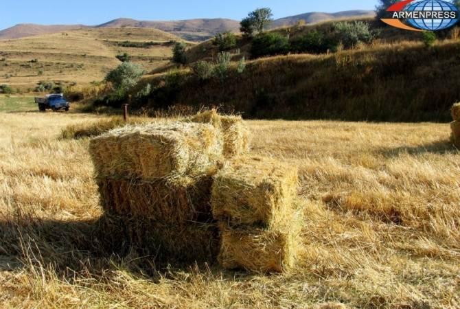 Ֆերմերները ստիպված են լինելու իրենց անասուններին հարկադիր մորթի ենթարկել
