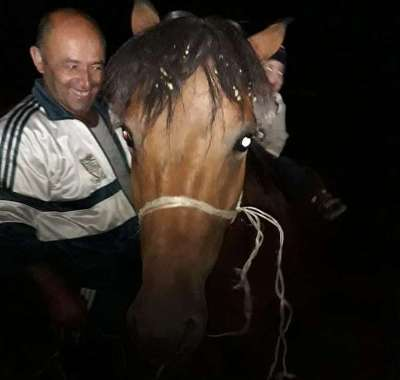 Ադրբեջանի օկուպացված տարածքից՝ Քարին տակ գյուղից, ձին 9 ամիս անց հասել է Աջափնյակ, գտել իր տիրոջը