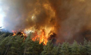 Էրդողանը նշել է անտառային հրդեհների հնարավոր պատճառը