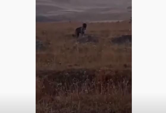 ՏԵՍԱՆՅՈՒԹ. Ինչպես են ադրբեջանցի զինվորները կրակում շան վրա